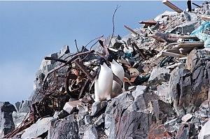 南極で撮影された写真。ペンギンの後ろにはゴミの山が見える