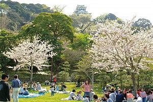 城山公園花見