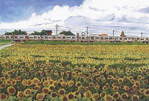 「館野のひまわりと電車」飯田真菜美