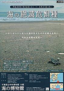海の絶滅危惧種